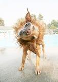 Perro mojado Fotos de archivo libres de regalías