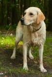 Perro mojado después del baño Imagenes de archivo
