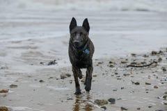 Perro mojado despu?s de un d?a duro en la playa foto de archivo