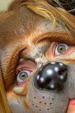 Perro-muchacha Fotos de archivo