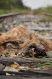 Perro muerto Imagenes de archivo
