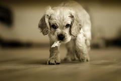 Perro mullido blanco Imagenes de archivo