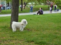 Perro mullido blanco feliz y lindo en el parque Imagenes de archivo