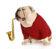 Perro musical Fotografía de archivo libre de regalías