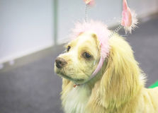 Perro muy lindo Fotos de archivo libres de regalías
