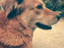 Perro nacional en la India Fotografía de archivo