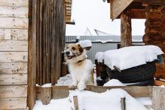 Perro nacional que guarda el hogar imagen de archivo libre de regalías