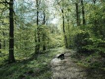 Perro negro Imagenes de archivo