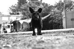 Perro negro Imagen de archivo libre de regalías