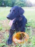 Perro negro con el disco volador Imagen de archivo