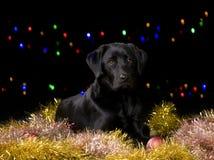 Perro negro con los apoyos de la Navidad imagenes de archivo