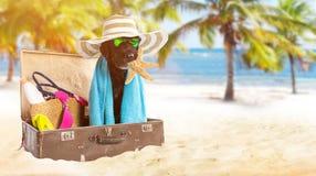 Perro negro del verano divertido con los accesorios del verano Imágenes de archivo libres de regalías