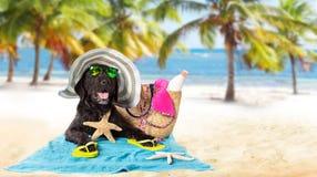 Perro negro del verano divertido con los accesorios del verano Imagen de archivo libre de regalías