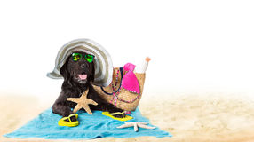 Perro negro del verano divertido con los accesorios del verano Foto de archivo