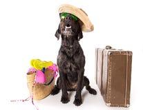 Perro negro del verano divertido con los accesorios del verano Fotografía de archivo