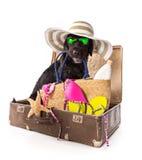 Perro negro del verano divertido con los accesorios del verano Foto de archivo libre de regalías