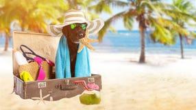 Perro negro del verano divertido con los accesorios del verano Imagenes de archivo