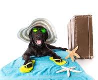 Perro negro del verano divertido con los accesorios del verano Fotografía de archivo libre de regalías