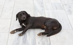 Perro negro delante de una casa imagenes de archivo