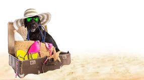 Perro negro divertido en una playa arenosa Fotos de archivo libres de regalías