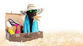 Perro negro divertido en una playa arenosa Foto de archivo libre de regalías