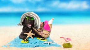 Perro negro divertido en una playa arenosa Foto de archivo
