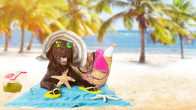 Perro negro divertido en una playa arenosa Imagen de archivo
