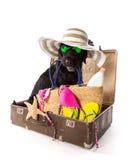 Perro negro divertido en una playa arenosa Fotos de archivo