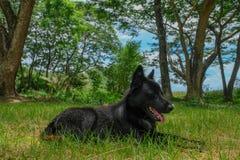 Perro negro en el bosque imagenes de archivo