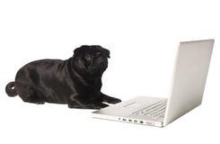 Perro negro en el ordenador Foto de archivo