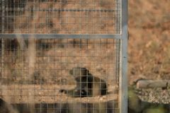 Perro negro en la perrera fotografía de archivo