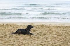 Perro negro en la playa fotos de archivo libres de regalías