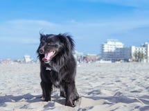 Perro negro en la playa Fotografía de archivo libre de regalías