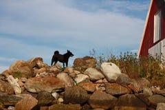Perro negro en puesta del sol Foto de archivo libre de regalías