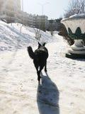 Perro negro grande que corre abajo de la calle en invierno Fotos de archivo