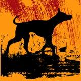 Perro negro Grunge Foto de archivo libre de regalías