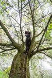 Perro negro hermoso que presenta en el árbol de la primavera en flor Imagen de archivo