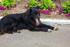 Perro negro lanudo sin hogar fotos de archivo libres de regalías