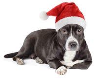 Perro negro lindo con el sombrero de santa Fotografía de archivo