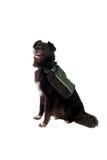 Perro negro que desgasta un morral Fotografía de archivo libre de regalías