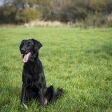 Perro negro que se sienta en un campo Imágenes de archivo libres de regalías