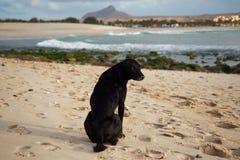 Perro negro que vaga en la playa en las islas de Cabo Verde, Boa Vista fotos de archivo libres de regalías
