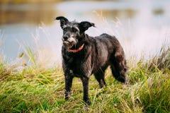 Perro negro tamaño pequeño en hierba cerca del río, lago Fotografía de archivo libre de regalías