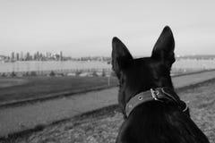 Perro negro triste Foto de archivo libre de regalías