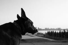 Perro negro triste Imagen de archivo