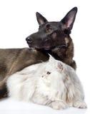 Perro negro y gato persa junto En el fondo blanco Imagen de archivo libre de regalías