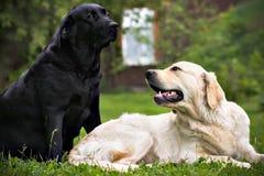 Perro negro y perro blanco, en hierba verde Fotografía de archivo