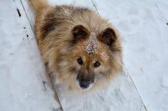 Perro nevoso lindo de Stepka que vive por yanikha del Vodop del lago ' fotos de archivo