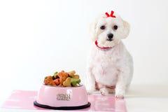 Perro obediente Imagen de archivo libre de regalías
