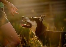 Perro obidient Imagen de archivo libre de regalías